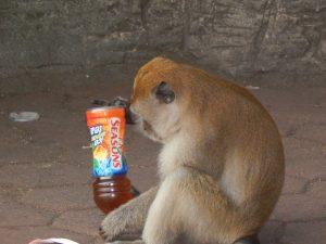 smart monkey opening bottle in kuala lumpur
